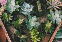 G A R D E N / gardening