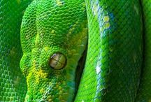 zelená x green