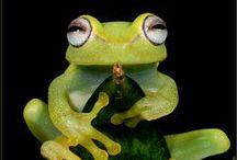 Frogs / by Shailendra Tokas