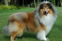 Dogs - Big & Beautiful / by Shailendra Tokas