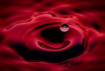 Luce 2012 / Rosso rubino intenso. Profumi di ribes mora, pepe nero, chiodi di garofano...