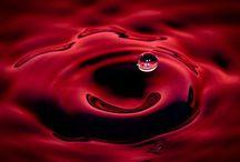 Luce_2012_2 / Rosso rubino intenso. Profumi di ribes, mora, pepe nero, chiodi di garofano...