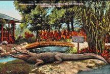 L.A. Alligator Farm