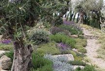 Gardens, Mediterranean Design / garden design, plants, landscape, small scale