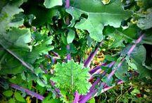 Green Gardening / Sustainable gardening ideas.