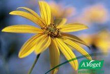 Το βότανο του μήνα / Twitter Campaign με θεματολογία την επιλογή ενός βοτάνου κάθε μήνα σχετικό με τις εποχιακές ανάγκες των καταναλωτών  www.avogel.gr