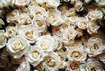 Our Favorite Corsage Flower Varieties