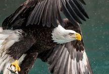 Águilas y Halcones