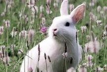 Conejos y Liebres