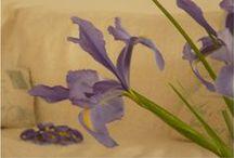 Flowers & Floral Arrangements