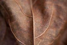 COLOR :: Brown / by Nique Nique