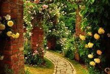 Jardim / Jardim e paisagismo