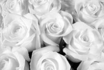 - White -