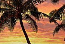 - Exotic beach -