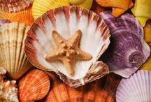 -Shells -