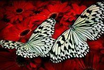 - Butterflies -
