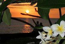 - Hawaii -