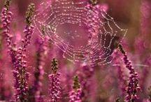- Spider web -