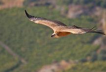 Τα πετεινά του ουρανού... / Ελληνικά πτηνά