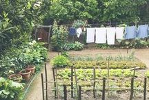 garden / sustainable gardening / grow food, not lawns / permaculture