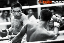 Tiger, Tiger, Tiger! / All things related to Tiger Muay Thai that we find on Pinterest and in our photo collections...just a mash of awesome stuff!  / by Tiger Muay Thai