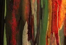 Textures / by Rosemary Hodo