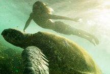 I Like Turtles / Everything Turtle / by Rosemary Hodo