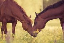 horses, horses and other pets xx / Love your pets