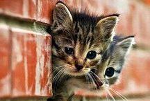 Cats / by Esther Kloddertje verf
