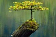 Nature / Mondes végétal, minéral ou aquatique... La Terre est magnifique
