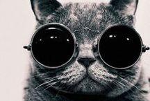 Chats / J'AI CRAQUE!!! Du chat, du chat et encore du chat... sous toutes ces formes... Miaou