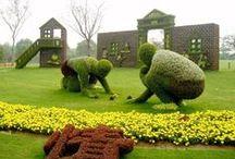 Garden ✿ Jardim ✿  Flores ✿ Suculentas