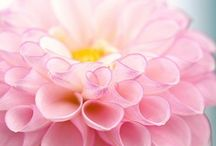 ❀ ✿ Flowers ✿ ❀