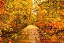 Autumn / by katherine schaffer