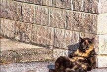 katten / Katten kleine katten eigenwijze katten persoonlijkheid katten menselijke katten