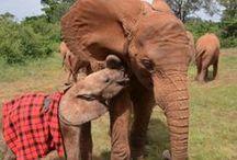 We LOVE Elephants