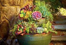 Outdoors Tips / From DIYs to great pointers, here is a collection of great backyard tips!