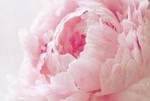 Szívcsücskök- Virágok