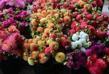"""""""Floret Flower Farm"""" / Floret Flower Farm"""