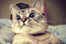 Nala catty