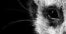 L'art Animal & Végétal II / Mary Jo Hoffman & Cie