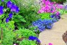 Gardening / Everything for the garden / by Tammi Cordell