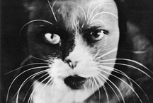 Wanda Wulz / Wanda Wulz (Trieste, 25 July 1903 – Trieste, 16 April 1984) was an Italian experimental photographer. One great example of her works is the self-portrait merged with a portrait of a cat.