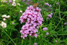 花・植物・緑 / 和裁技能士さんたちはお花好き?たくさんのお花写真をどうぞ。芽や実の写真もあります( ´ ▽ ` )ノ