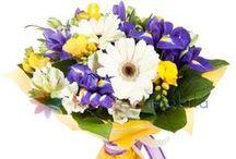 Buchete gerbera / Gerbera bouquets / http://www.florariamobila.ro/buchete-de-flori/buchete-gerbera.html