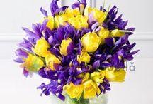 Buchete iris / Iris bouquets / http://www.florariamobila.ro/buchete-de-flori/buchete-iris.html