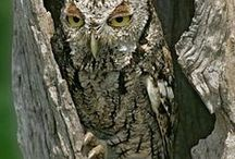 OWLS !