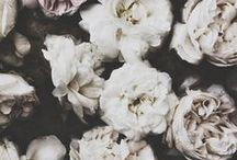Flowers power