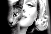 p e o p l e  l  m e n  &  c a ts / why creative people like cats?