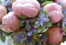 Flowers // Blumen / Schönste Blumen // Blumensträuße